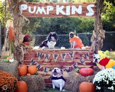These guys are ready for Halloween!  Joslyns Photography