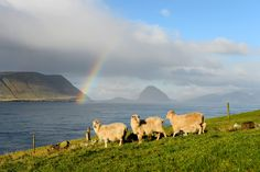 """Faroe Islands:  Part of Denmark, the wild, rugged islands offer adventure-seeking visitors stunning natural beauty, hotels awash in Scandinavian """"hygge, and a new Michelin-starred restaurant, Koks (the islands' first)."""