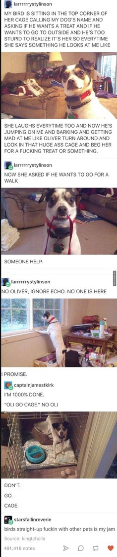 Never Seen The Continuation On Here - The Best Funny Pictures #parrothumor