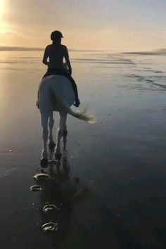 Beautiful Nature Scenes, Beautiful Horses, Animals Beautiful, Cute Horses, Horse Love, Country Boy Can Survive, Horse Videos, Show Jumping, Horse Riding