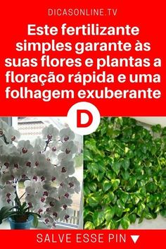Fertilizantes caseros para plantas | Este fertilizante simples garante às suas flores e plantas a floração rápida e uma folhagem exuberante | Aprenda a fazer! Dream House Plans, Bonsai, Flora, Home And Garden, Outdoor Structures, Plants, Gardening, Decoupage, Pregnancy