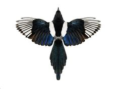 magpie birds. What a great thing to tattoo in my back
