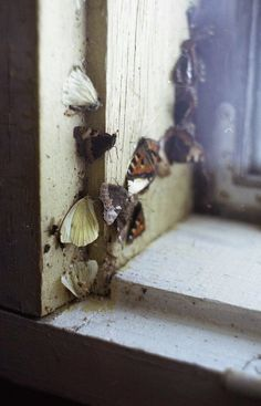 butterflies she finds exploring as a lonely child. They were tacks into the wood so they could not fly away and MG cries over them and buries them in a piece of lace curtain behind the building.