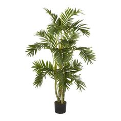 Areca Palm Silk Tree - 4 Feet Tall >>> You can get more details by clicking on the image.