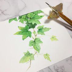 기초자료 아이비🌱  .  동영상 길게 찍었는데 몇번을 해도 안올라가네유..ㅠㅠ  .  #수채화 #그림 #자료 #기초자료 #일러스트 #부산 #성인미술 #센티데이 #보태니컬 #아이비 #초록식물 #watercolor #artwork #aquarelle #watercolour #art #illust #botanical #plant