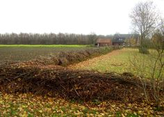 """Above: A time-honored tradition in Europe, dead hedges have """"a long history in agriculture: peasants simply cut off their cuttings as a border marker between pasture and farmland, where they collapsed and gradually developed"""" into a low-impact hedge that provides habitats for nesting birds and other wildlife.  What starts as a dead wood is soon brought to life: birds build their nests there, hedgehogs find shelter, and protected winter quarters are also available for many other animalsare"""