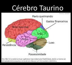 Cerebro Taurino