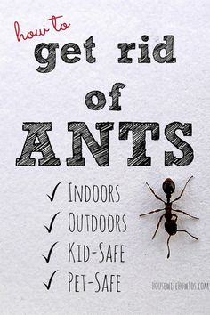 It's that time of year when ants are everywhere! Here's how to get rid of ants indoors and out using methods and ingredients that are kid and pet-safe! Home Remedies For Ants, Ant Remedies, Health Remedies, Natural Remedies, Natural Ant Repellant, Essential Oil Ant Repellant, Essential Oils, Big Black Ants, Homemade Ant Killer