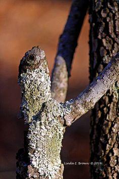 Dogwood Lizard Hug Your Tree