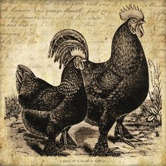 Rooster & hen label x square label. Grungy/distressed look with handwritten 1792 farm sale document in background. Primitive Labels, Chicken Art, Chicken Houses, Chickens And Roosters, Galo, Vintage Farm, Free Graphics, Illustrations, Vintage Labels