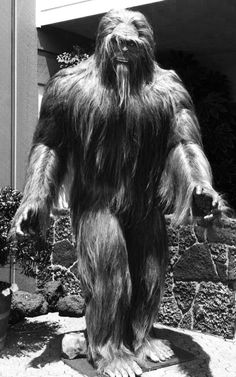 Sasquatch - did you know that a Grizzly Bear will run like HELL if it detects a Bigfoot nearby! That should tell you something!!!!