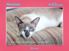 Manchinha divulgado na VejaSP!   http://vejasp.abril.com.br/blogs/bichos/2014/08/como-adotar-um-gatinho-atraves-da-ong-catland/