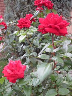 """At my """"second home"""" where I plan to take time to smell the roses, both figuratively speaking and for real."""