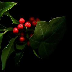 The Colours of Christmas: Holly & The Ivy Magical Christmas, Christmas Love, Christmas And New Year, All Things Christmas, Christmas Holidays, Christmas Crafts, Merry Christmas, Christmas Decorations, Xmas