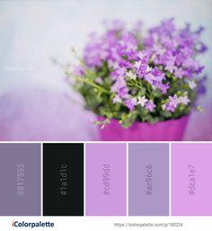 Color Palette Ideas from Flower Violet Purple Image Color Combinations, Color Schemes, Purple Color Palettes, Find Color, Website Ideas, Lavender Color, Paint Chips, Colour Board, Flower Images