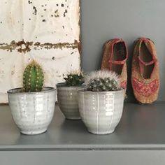 I've got three new Prickly Plant Pets! Little Greene Paint Company, Cosy Kitchen, Baby Bump Photos, Shelfie, Make It Work, Vintage Home Decor, Cacti, Houseplants, Pets