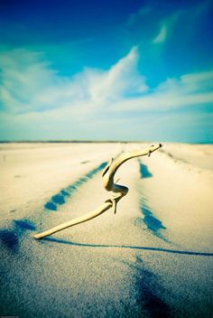 2ft x 3ft The SCurve Metallic Photo Print by Ulianasmoments, $185.00
