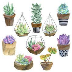 Watercolor exotic succulents set in flowering pots. Indoor plants in flowering pots Succulents Drawing, Watercolor Succulents, Watercolor Flowers, Watercolor Art, Succulents Painting, Succulents Art, Watercolor Portraits, Watercolor Landscape, Garden Drawing