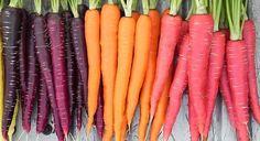 Le carote viola correggono gli effetti di una dieta non corretta In origine erano viola poi per onore ai regali olandesi sono divenute arancioni ed ora ritornano carote viola carote