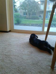 Lazy bunny day