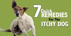 """They call it """"The Dog Days of Summer"""" for a reason! Rashes and bites are bound to happen, so here are seven quick ways to ease your dog's itch . . ."""