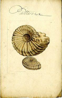 fibronacci spiral in life Plant Illustration, Botanical Illustration, Prehistoric Creatures, Modern Artwork, Botanical Prints, Sacred Geometry, Natural History, Vintage Prints, Art Forms