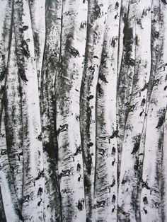 Timeless Treasures Birch Tree Bark Trunks Cotton Fabric 1 Yard. This idea is to make an insulation curtain for the draughty front door. It will be like going to Narnia every time you leave the house.