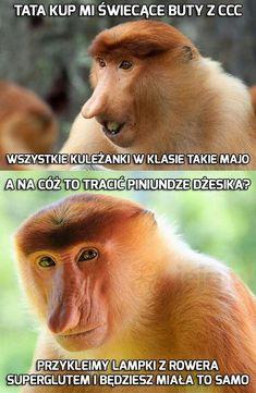 - Funny Monkeys - Funny Monkeys meme - - The post appeared first on Gag Dad. A Funny, Funny Memes, Jokes, Easy Pranks, Polish Memes, Straight People, Funny Monkeys, Good Mood, Poland
