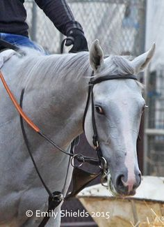 Highly regarded Dreamologist, a daughter of Tapit and Dreaming of Anna.