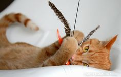 Finding a Forever Home through the Power of a Feather