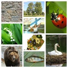 Environmental Studies, Girl Scouts, Finland, Bird, Outdoor Decor, Animals, Traveling, Design, Country