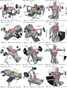 Chest Gym Workout Chart, Gym Workout Tips, Weight Training Workouts, Fitness Workouts, Workout Challenge, Shoulder Workout Routine, Chest Workout For Men, Full Body Workout Routine, Chest Workouts