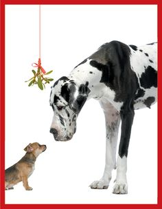 Mistletoe Dogs Holiday Card