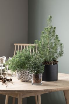 Planters, Planter Boxes, Container Plants