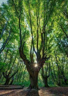 Quando la natura è un'opera d'arte Spettacolari alberi