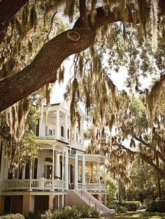 i really want a house with a southern feel surrounded by big trees