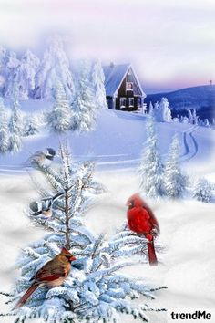 Birds+In+Cold+Snowy+Winter od Mirna M - trendme.net