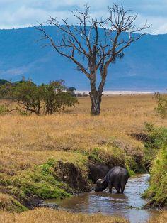Tanzania, Africa by pboehi on Flickr. Ngorongoro Conservation Area