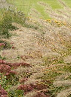 Desert Plains Fountain Gr Will Make A Beautiful Focal Point In Your Fall Garden