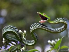 Various beautiful animals - green vine snake - Wonderful World Photos