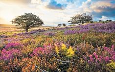 Why hawthorn is the perfect tree for small gardens, and five varieties to plant | The Telegraph Lyme Park, Country Life Magazine, Paradise Pictures, Richmond Park, Growing Tree, English Countryside, Small Trees, Landscape Photos, Landscape Paintings