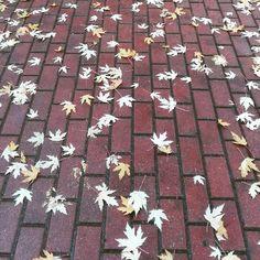 Złota polska warszawska jesień #jesień #autunno #autumn #polska #polish #polacca