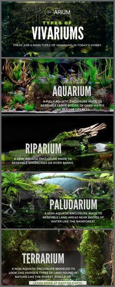 "Vivarium: The Ultimate Guide & ""How To"" Build 