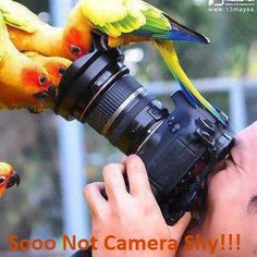 this is a lie. my bird hates the camera. she wants the camera to suffer.