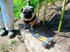 Xisca supervisando el trabajo de Nando, xDDDDD.