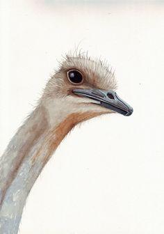 """@:!καʏℓα ƨтʏℓɛƨ • ^_^~~! """"I'm in love with an ostrich. All the neighbors complain but you see. But she loves me. Ooo. Can't help it if they don't understand."""" hahaha"""