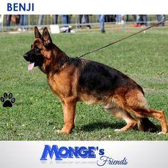 Benji #Mongesfriends