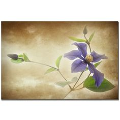 Philippe Sainte-Laudy 'Clemantis Lamiginose' Canvas Art - Overstock™ Shopping - Top Rated Trademark Fine Art Canvas