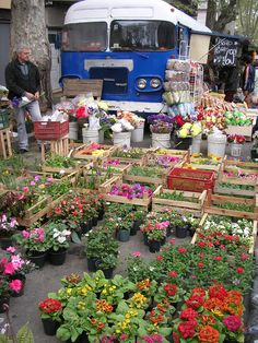 flowers at the market, Barrio Sur, Montevideo, Uruguay.