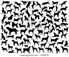 Collection of vector silhouettes of various dog breeds and poses Poster Dog Outline, Dog Poses, Call Of The Wild, Dog Silhouette, Buy Posters, Classroom Themes, Doberman, Rottweiler, Mans Best Friend